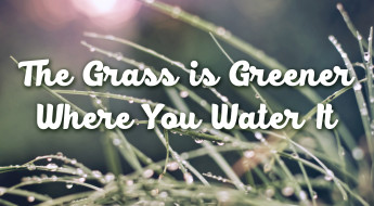 The Grass is Greener 2